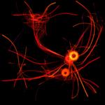 s037_energy_transfer_02